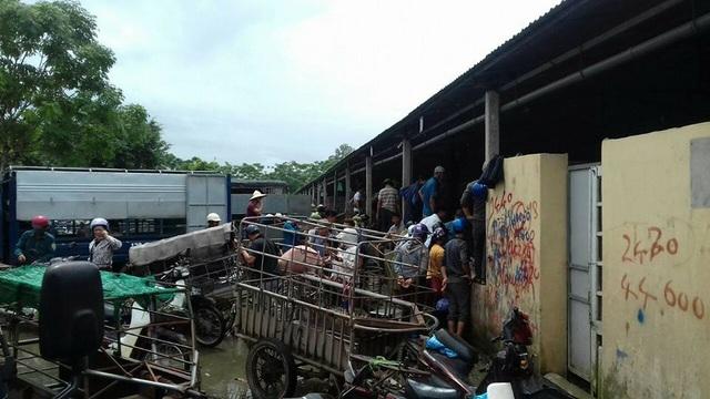 Thương lái tranh nhau chọn mua lợn hơi tại chợ lợn An Hội (Bình Lục - Hà Nam). Ảnh: Việt Tùng