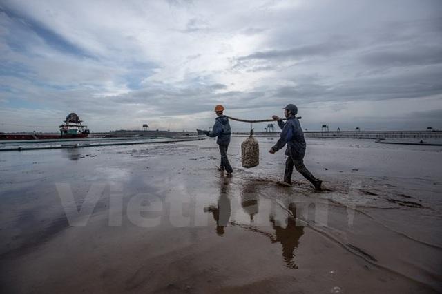 Thái Bình: Kiếm tiền triệu từ nghề cào ngao thuê ở Đồng Châu - 12
