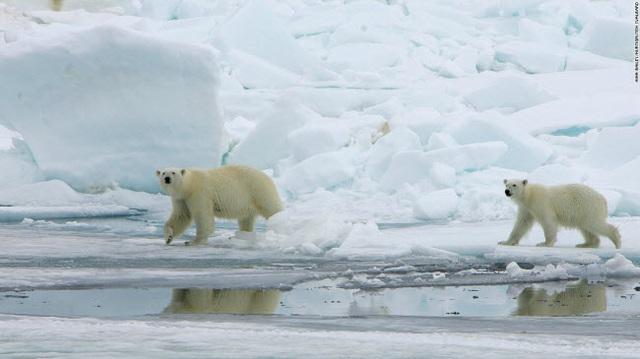 Những tour khám phá động vật hoang dã hấp dẫn nhất thế giới - 13