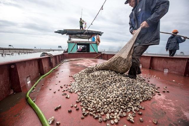Thái Bình: Kiếm tiền triệu từ nghề cào ngao thuê ở Đồng Châu - 13