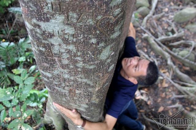 """Cây 800 tuổi ở Đà Nẵng """"đau đớn"""" vì chằng chịt """"lời tỏ tình"""" - 13"""