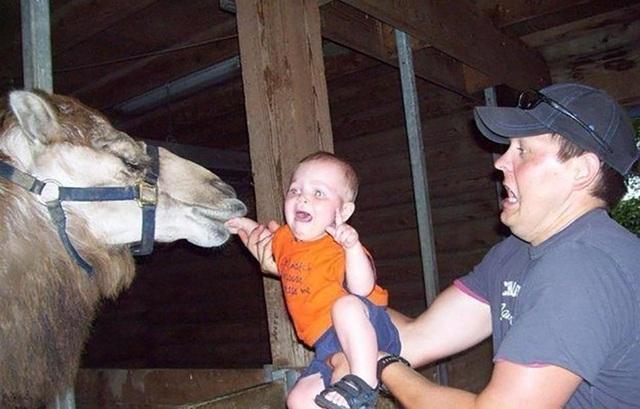 Đừng khóc con ơi, cha chỉ cho lạc đà gặm tay tý thôi mà!