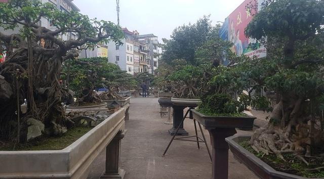 Nhiều cây trong số này đã tham dự các cuộc triển lãm sinh vật cảnh tại Hoàng thành Thăng Long, tại Bảo tàng Hà Nội trong Đại lễ 1.000 năm Thăng Long - Hà Nội
