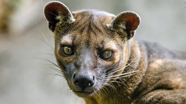 Những tour khám phá động vật hoang dã hấp dẫn nhất thế giới - 14