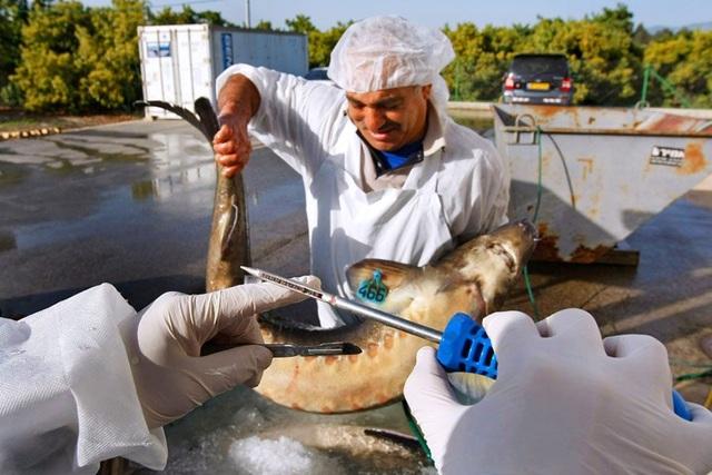 Mục sở thị món ăn xa xỉ bậc nhất hành tinh: Trứng cá tầm giá bạc tỷ - 5