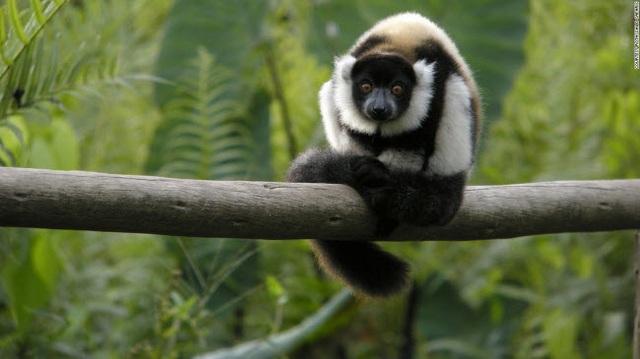 Những tour khám phá động vật hoang dã hấp dẫn nhất thế giới - 15