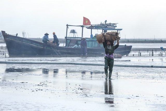Thái Bình: Kiếm tiền triệu từ nghề cào ngao thuê ở Đồng Châu - 15