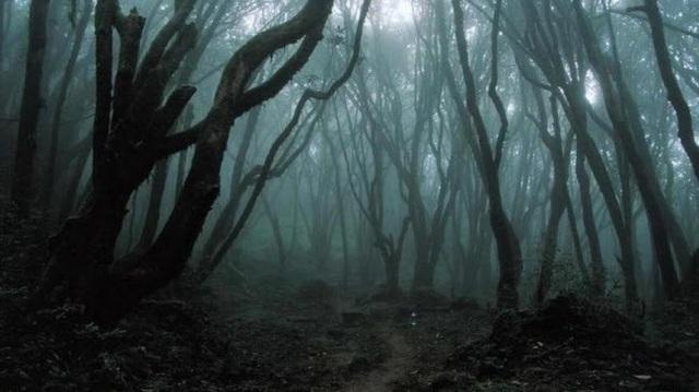 Khu rừng Hoia Baciu cũng trở thành địa điểm nổi tiếng đối với các nhà khám phá và tìm kiếm những điều huyền bí đến từ Đức, Pháp, Mỹ và Hungary.