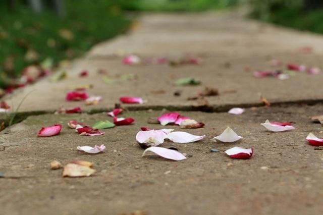 Điểm đến hấp dẫn cho người đam mê hoa hồng dịp 30/4 tại Hà Nội - 16
