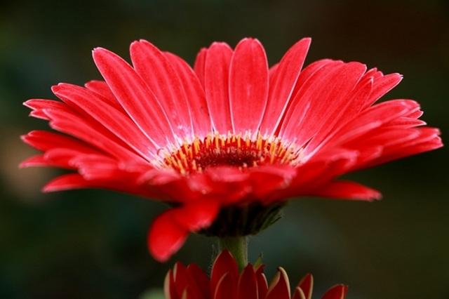 Điểm đến hấp dẫn cho người đam mê hoa hồng dịp 30/4 tại Hà Nội - 19