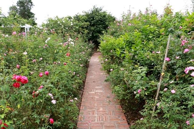 Điểm đến hấp dẫn cho người đam mê hoa hồng dịp 30/4 tại Hà Nội - 20