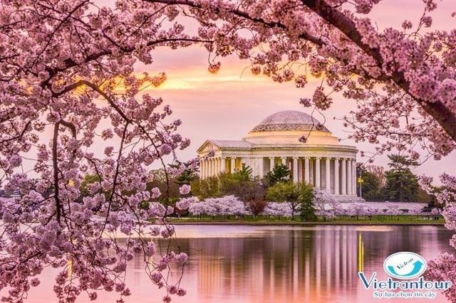 Ngắm hoa Anh Đào đẹp nhất thế giới chỉ từ 11,2 triệu đồng - 2