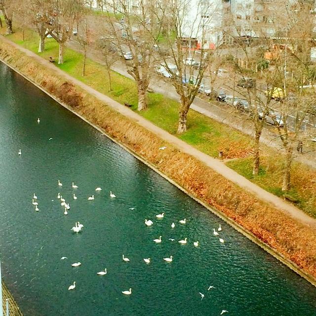 Một góc thành phố Strasbourg khi xuân về.