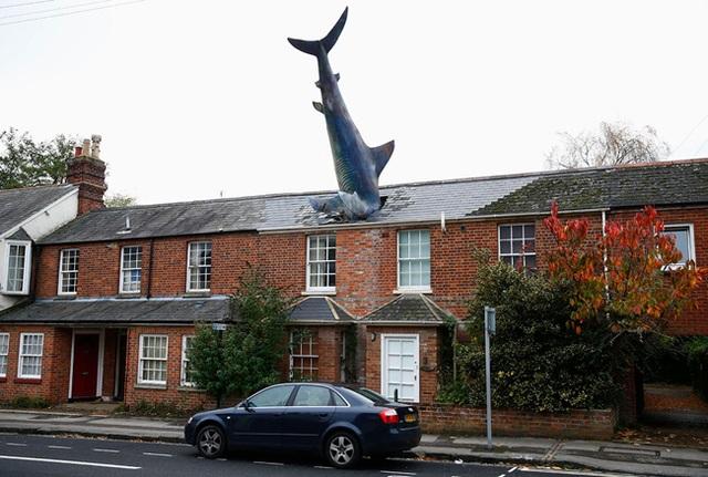 """Mô hình cá mập dài tới 7,6m """"đâm đầu"""" xuống mái nhà ở Oxford, Anh."""