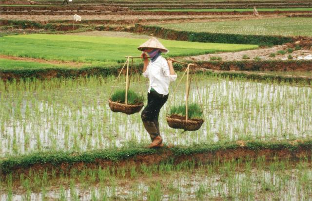 Bài luận thể hiện tài quan sát tuyệt vời của 9X gốc Việt đỗ Harvard - 2