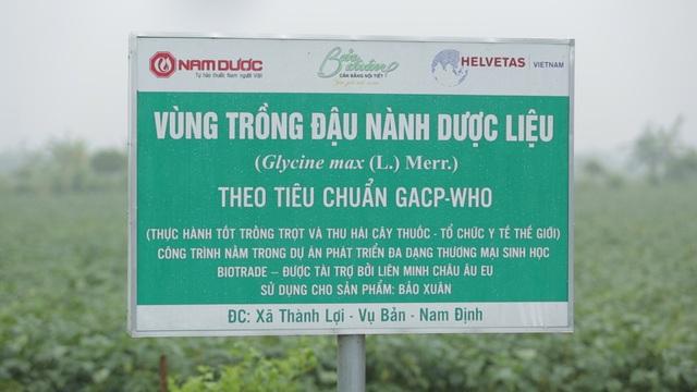 Vùng đậu nành theo tiêu chuẩn dược liệu GACP-WHO đầu tiên tại Việt Nam