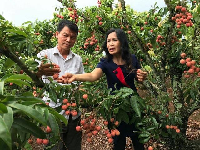 Vườn vải thiều của anh Trần Văn Hành được nhiều đoàn công tác tới thăm, trao đổi, học hỏi kinh nghiệm.