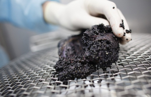 Mục sở thị món ăn xa xỉ bậc nhất hành tinh: Trứng cá tầm giá bạc tỷ - 1
