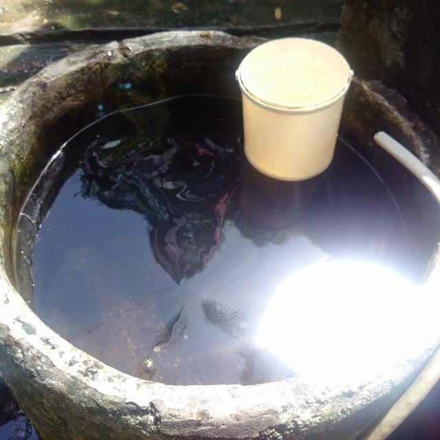 Nước trong thấy đáy. Ở đáy thùng có xác hoa khế cao rụng xuống, có cả xác côn trùng.