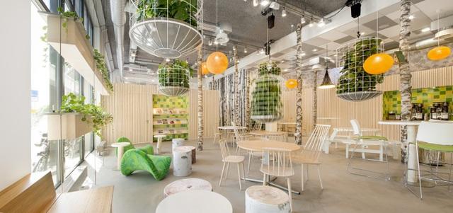 Một chậu cây xanh đặt trong văn phòng, một chậu cây cảnh nhỏ đặt trên bàn làm việc sẽ đặc biệt lý tưởng cho những ai muốn kiếm tìm sự thư giãn dễ chịu ngay tại phòng làm việc của mình