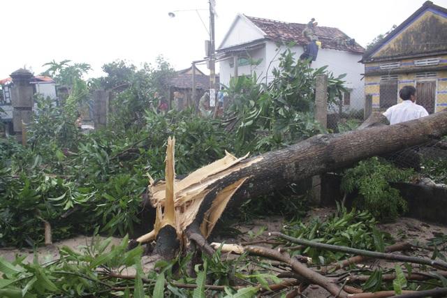 Nhiều cây cối bị ngã đổ