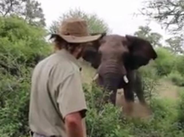 Alan bình tĩnh đối mặt con voi trưởng thành.