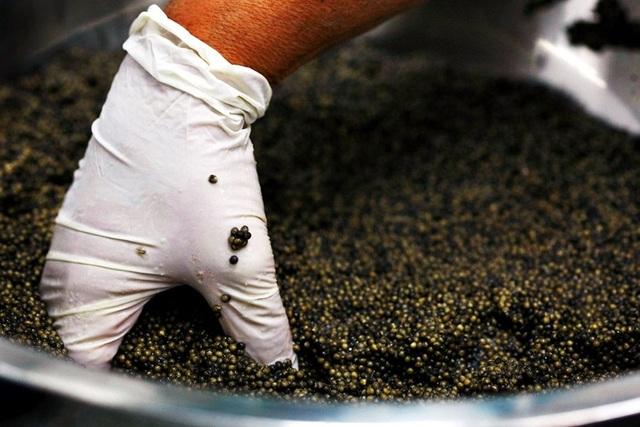 Mục sở thị món ăn xa xỉ bậc nhất hành tinh: Trứng cá tầm giá bạc tỷ - 10