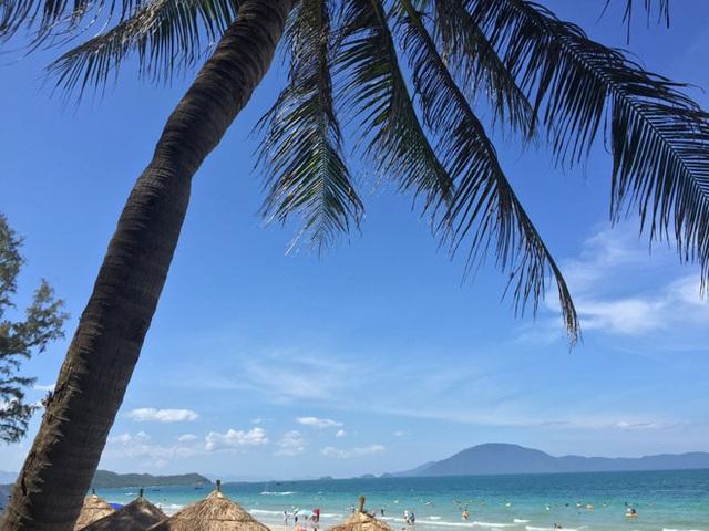 Dừa bung tán rộng tạo bóng mát trên bãi biển