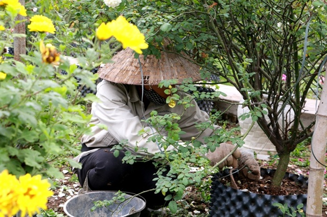 Điểm đến hấp dẫn cho người đam mê hoa hồng dịp 30/4 tại Hà Nội - 4