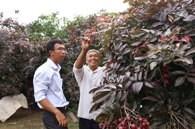Từ đây, tiếng tăm của loại nhãn này lan rộng khắp nơi. Có người ở Đồng Nai, Bến Tre hay tận Hà Nội… thậm chí du khách từ Đài Loan, Thái Lan cũng tìm đến nhà ông Huy để thăm vườn nhãn tím và hỏi mua cành về trồng.
