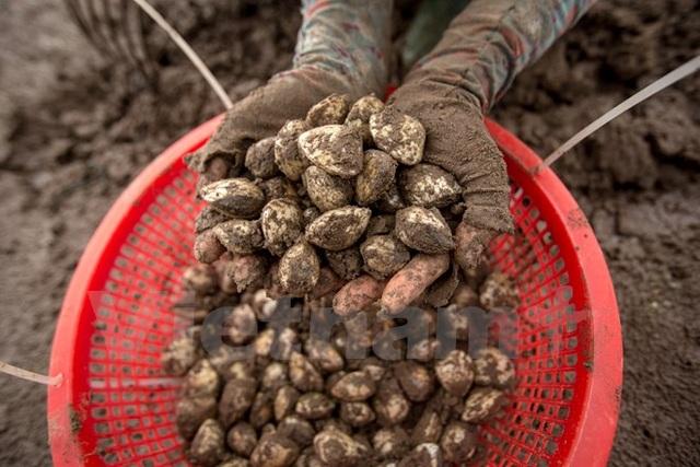 Thái Bình: Kiếm tiền triệu từ nghề cào ngao thuê ở Đồng Châu - 5