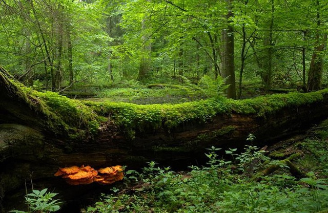 10 công viên quốc gia ở châu Âu khiến bạn phải sững sờ vì quá đẹp - 4