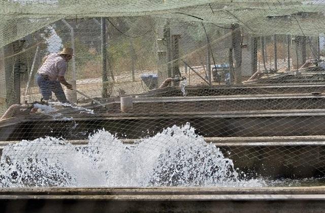 Mục sở thị món ăn xa xỉ bậc nhất hành tinh: Trứng cá tầm giá bạc tỷ - 13