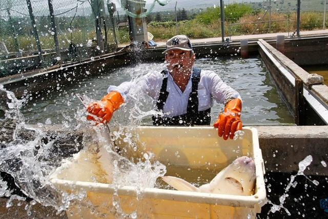 Mục sở thị món ăn xa xỉ bậc nhất hành tinh: Trứng cá tầm giá bạc tỷ - 14