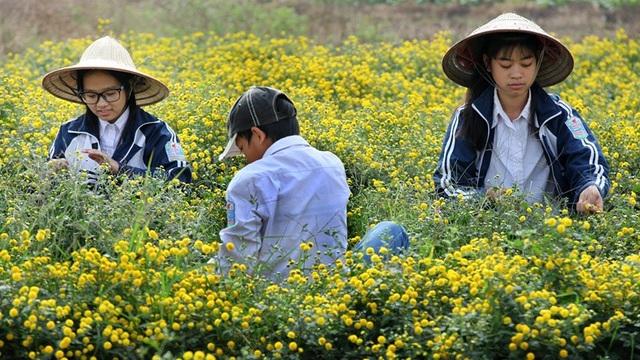 Nữ sinh nườm nượp rủ nhau kiếm tiền trên cánh đồng đẹp như mơ - 5