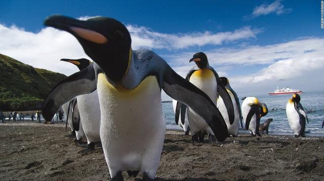 Những tour khám phá động vật hoang dã hấp dẫn nhất thế giới - 6