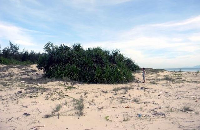 Bà V. cũng đã mua các lô đất ven biển gần 10.000m2 ở thôn Thanh Đông