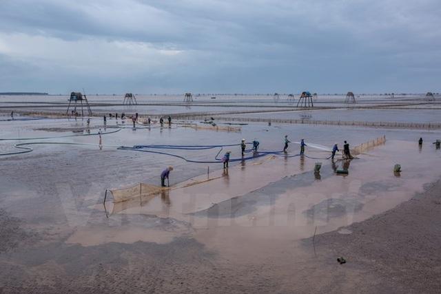 Thái Bình: Kiếm tiền triệu từ nghề cào ngao thuê ở Đồng Châu - 6