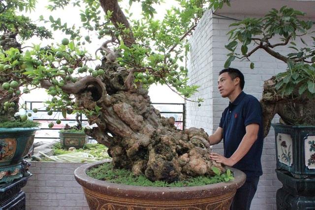 Ông Thọ cho biết, cây ổi này ô mua lại của một người chơi cây cảnh ở Lâm Đồng cách đây 5 năm, song ông Thọ từ chối chia sẻ thông tin ông đã mua cây ổi này bao nhiêu tiền vì lý do tế nhị, ông không muốn tiết lộ.