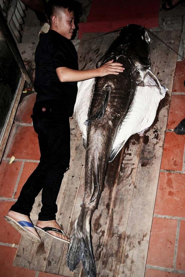 Con cá lăng đen dài đến 2 mét, nặng 70kg, thuộc loại cực hiếm