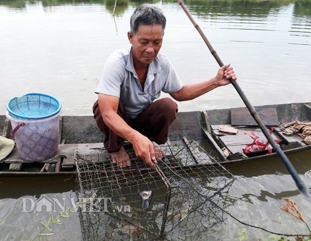 Thành viên THT luôn tuân thủ cách thả giống khắc khe, cách chăm sóc đặc biệt để mang đến năng suất cao (Ảnh: La Nguyen).