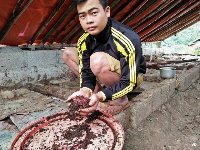 Làm giàu ở nông thôn: Cử nhân người Nùng về quê nuôi giun quế - 2