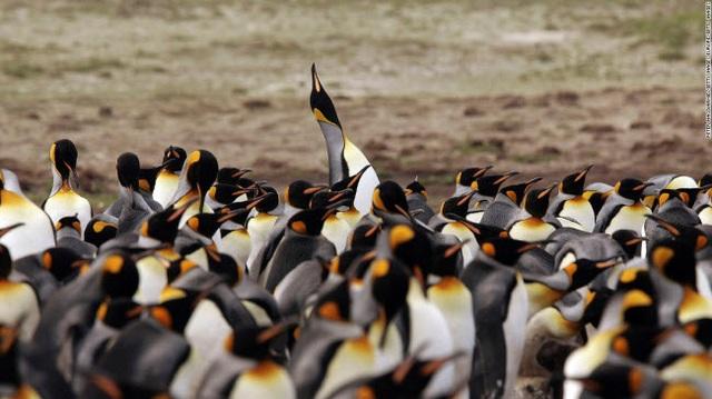 Những tour khám phá động vật hoang dã hấp dẫn nhất thế giới - 7