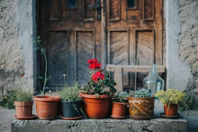 Những chậu cây nho nhỏ cũng mang nét lãng mạn riêng