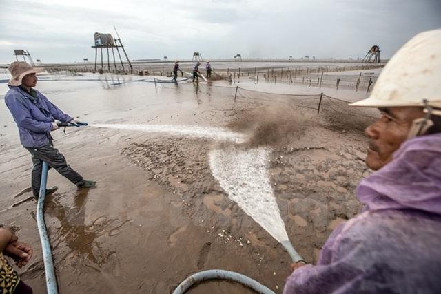 Thái Bình: Kiếm tiền triệu từ nghề cào ngao thuê ở Đồng Châu - 7