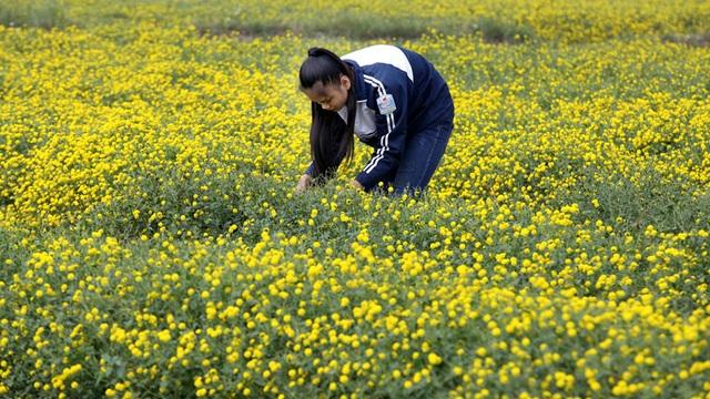 Nữ sinh nườm nượp rủ nhau kiếm tiền trên cánh đồng đẹp như mơ - 7