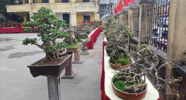 Cuộc đọ cây tiền tỷ của dân làng Triều Khúc - 7