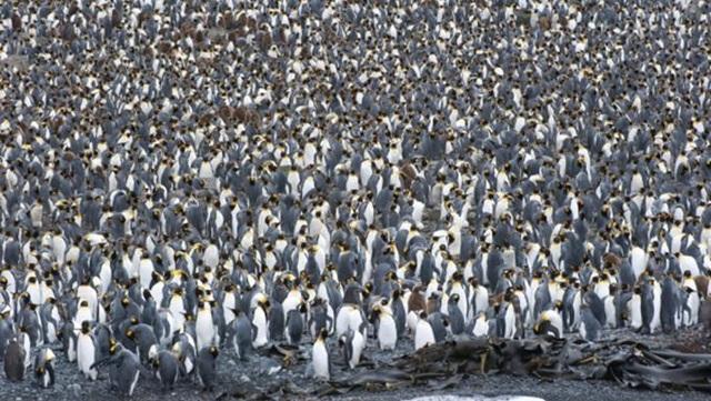 Những cuộc di cư đáng kinh ngạc của thế giới động vật - 7