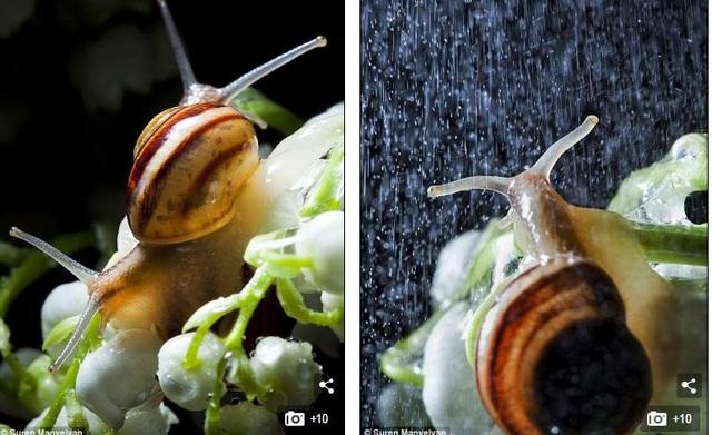 Bộ ảnh tuyệt đẹp về loài ốc sên dưới mưa - 7
