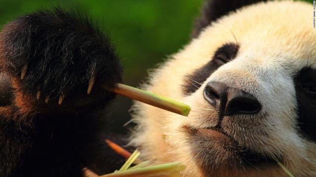 Những tour khám phá động vật hoang dã hấp dẫn nhất thế giới - 8